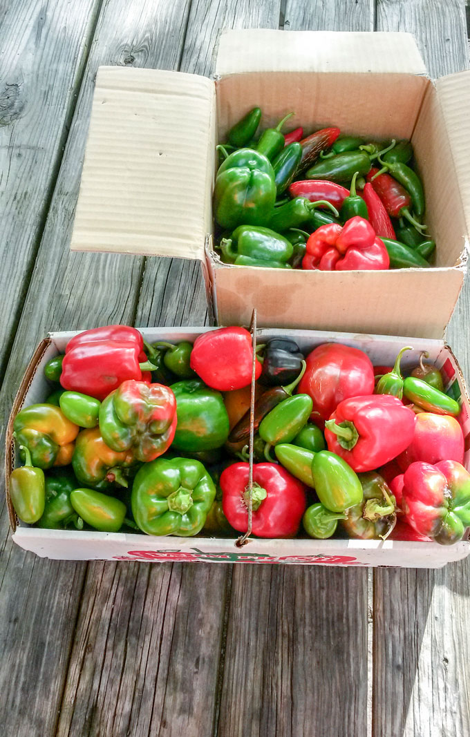 colorful bell peppers in baskets