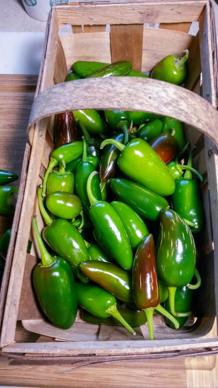 basket of jalapeno peppers