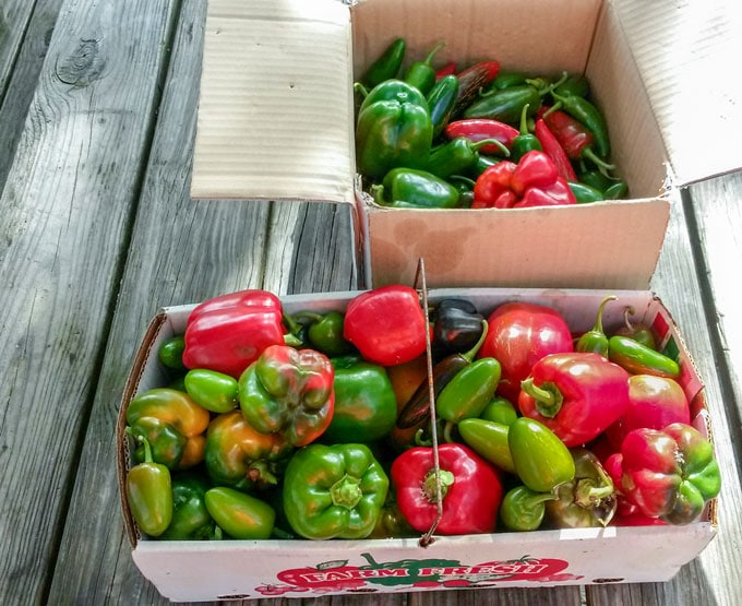 2 baskets with picked peppers