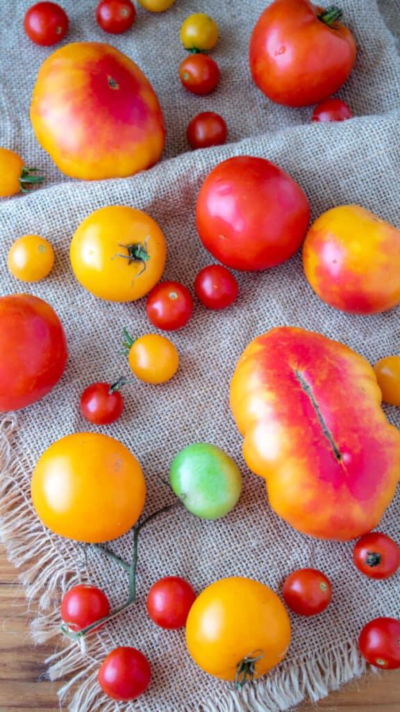Mixed varieties of tomatoes.