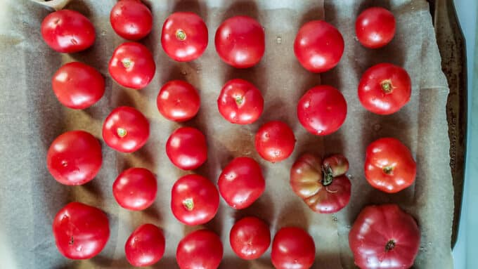 Whole tomatoes before freezing on parchment lined baking sheet.