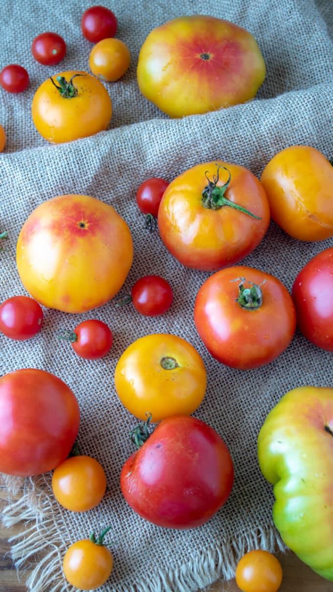 Colorful fresh tomatoes on burlap.